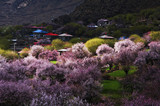 相约西藏林芝 川藏线11日游