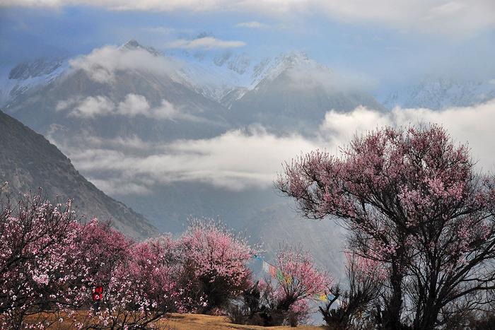 第5天:索松村-林拉高速-米拉山口-拉萨 海拔情况: 2900-5013-3650米